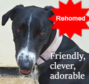 PACT Animal Sanctuary Dog of the Month Loki - rehomed