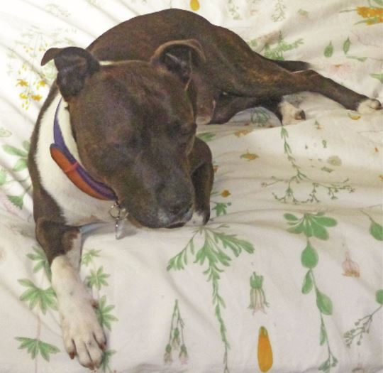 PACT-animal-sanctuary-Colin-Staffy-rescue