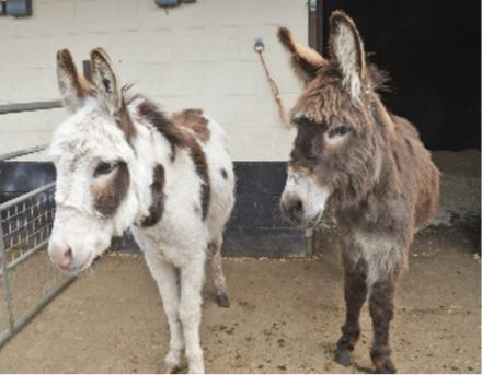 DONKEY-RESCUE-PACT-animal-sanctuary-Moses-and-Coco