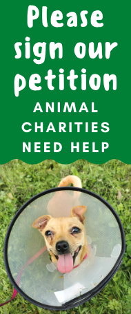 PACT-sign-petition-for-animal-charities-national-lottery-funding