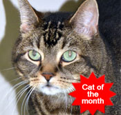 PACT-animal-cat-rescue-of-the-month