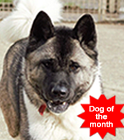 PACT-Animal-Sanctuary-rescue-dog-of-month