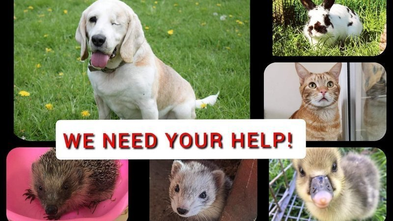 Please sign our petition - Animal charities need help