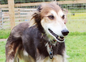 Sponsor Pippin the rescue dog