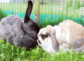 Appeal for rabbit village