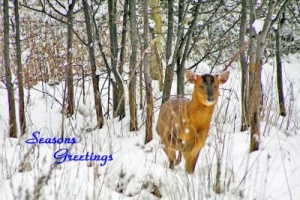 2019 Wildlife Christmas cards from PACT Animal Sanctuary - Design Pack B