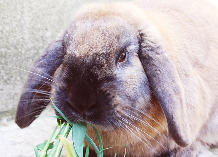 Feed a rescue rabbit