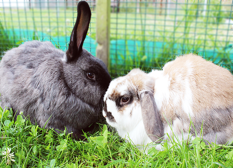 Support our rabbit village